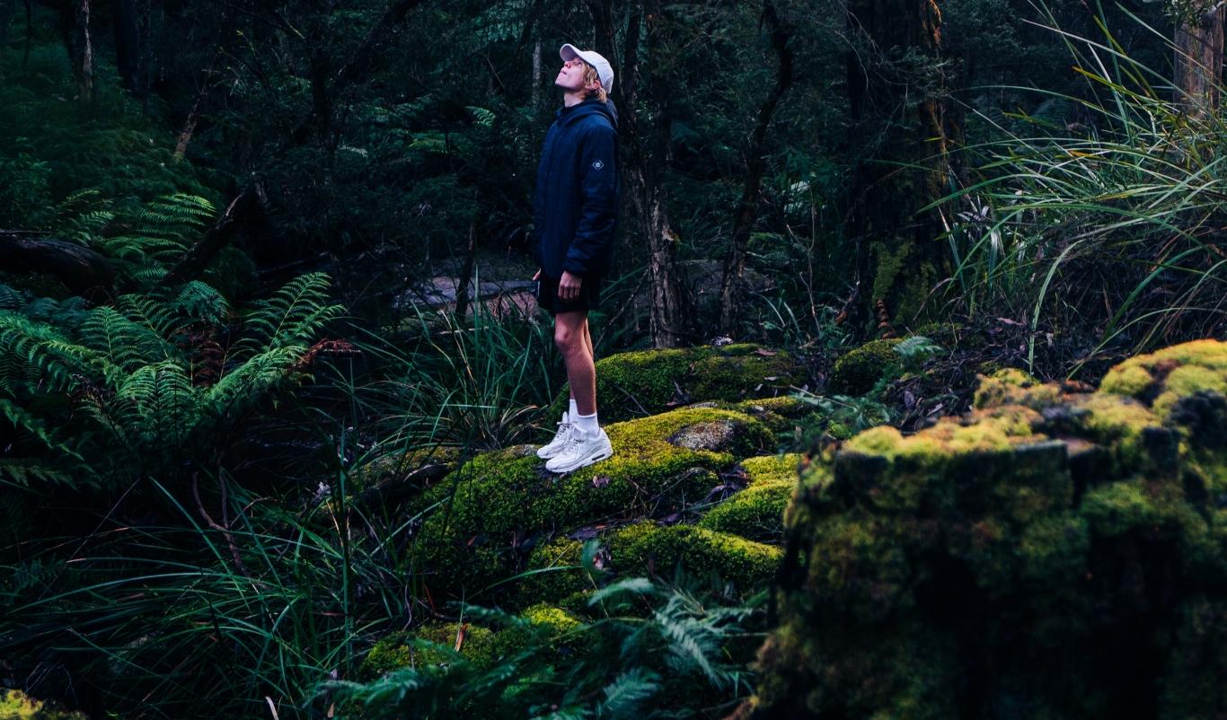 utomhus, skog, välmående,